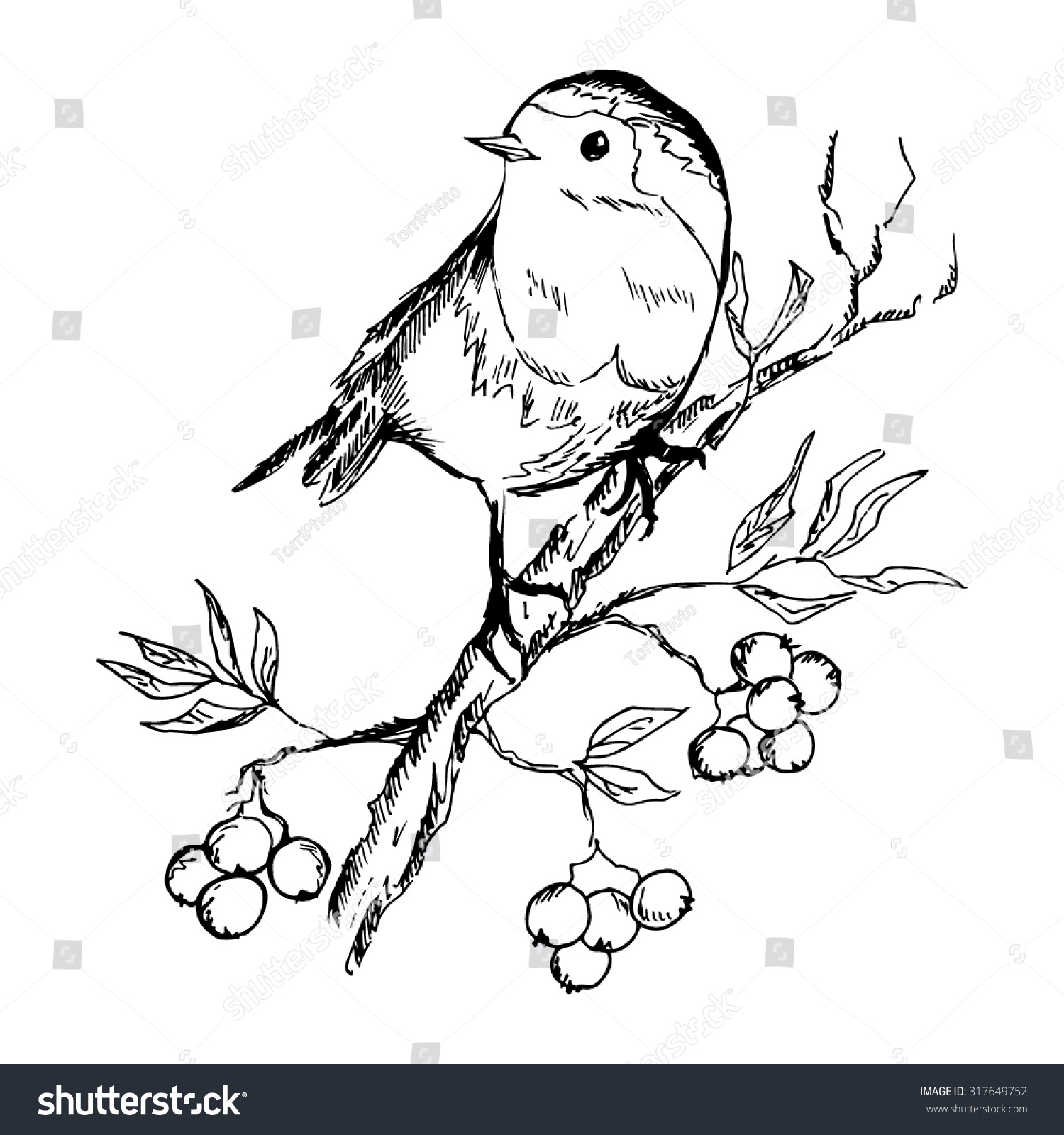 Bird On Branch Drawing