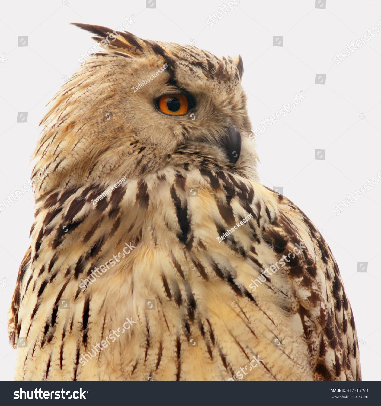 Owl Symbol Wisdom Knowledge Stock Photo Edit Now 317716790