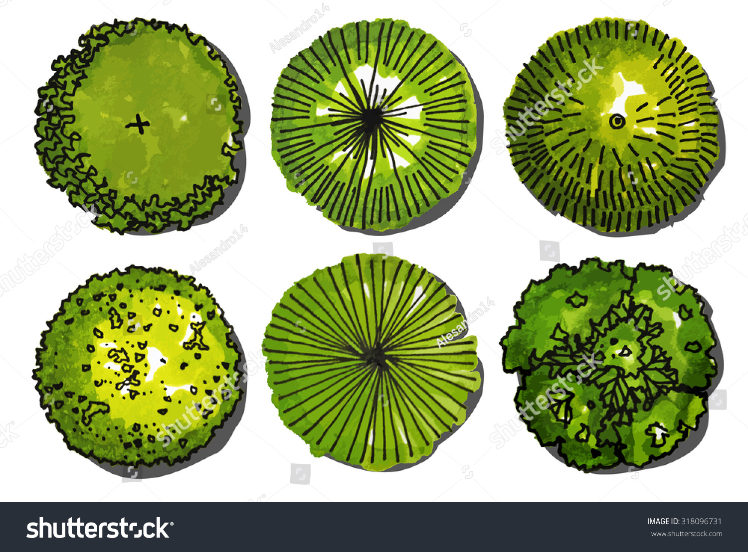 Plant top view vector in group download free vector art stock - A Set Of Trees Top View Use In Your Landscape Design Vector Illustration
