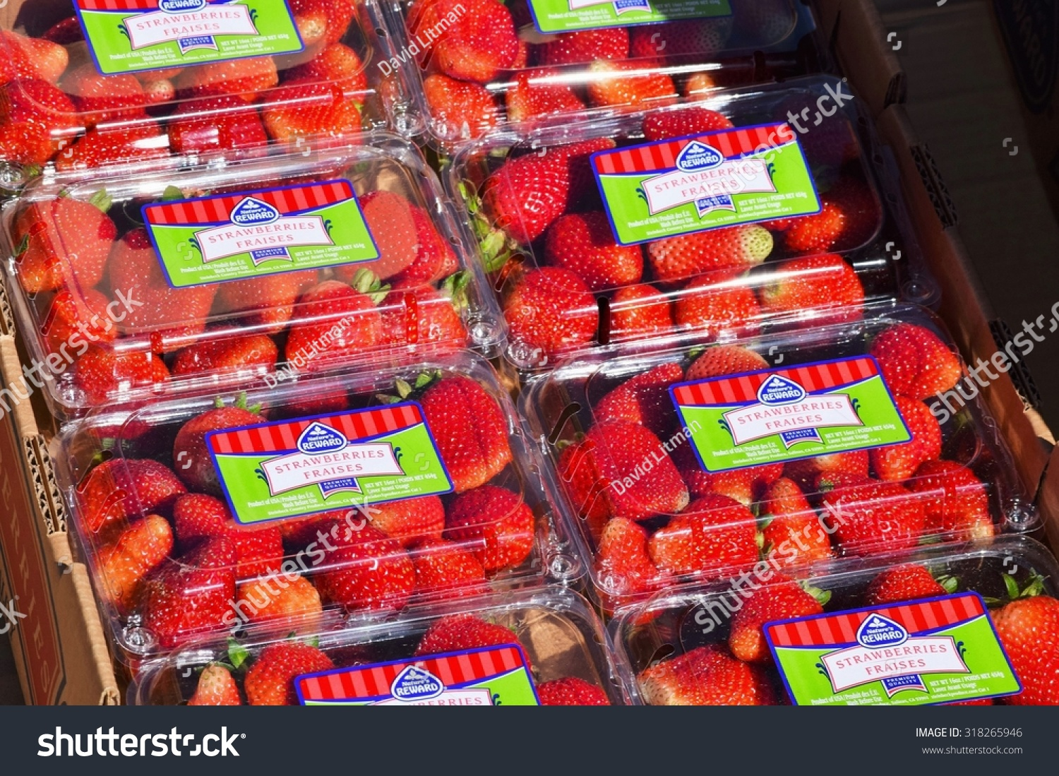 Salinas, California, USA - June 19, 2015: Freshly picked strawberries are packaged directly in the fields, ready for shipping, in the Salinas Valley of central California.