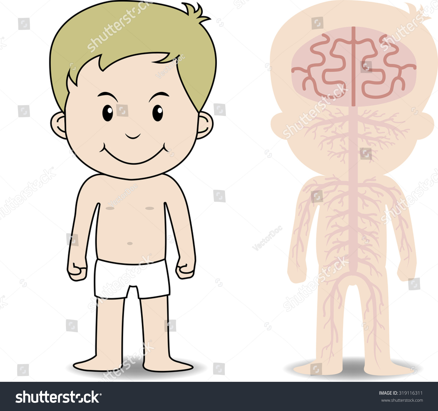 My Body Educational Anatomy Body Organ Stock Vector Royalty Free