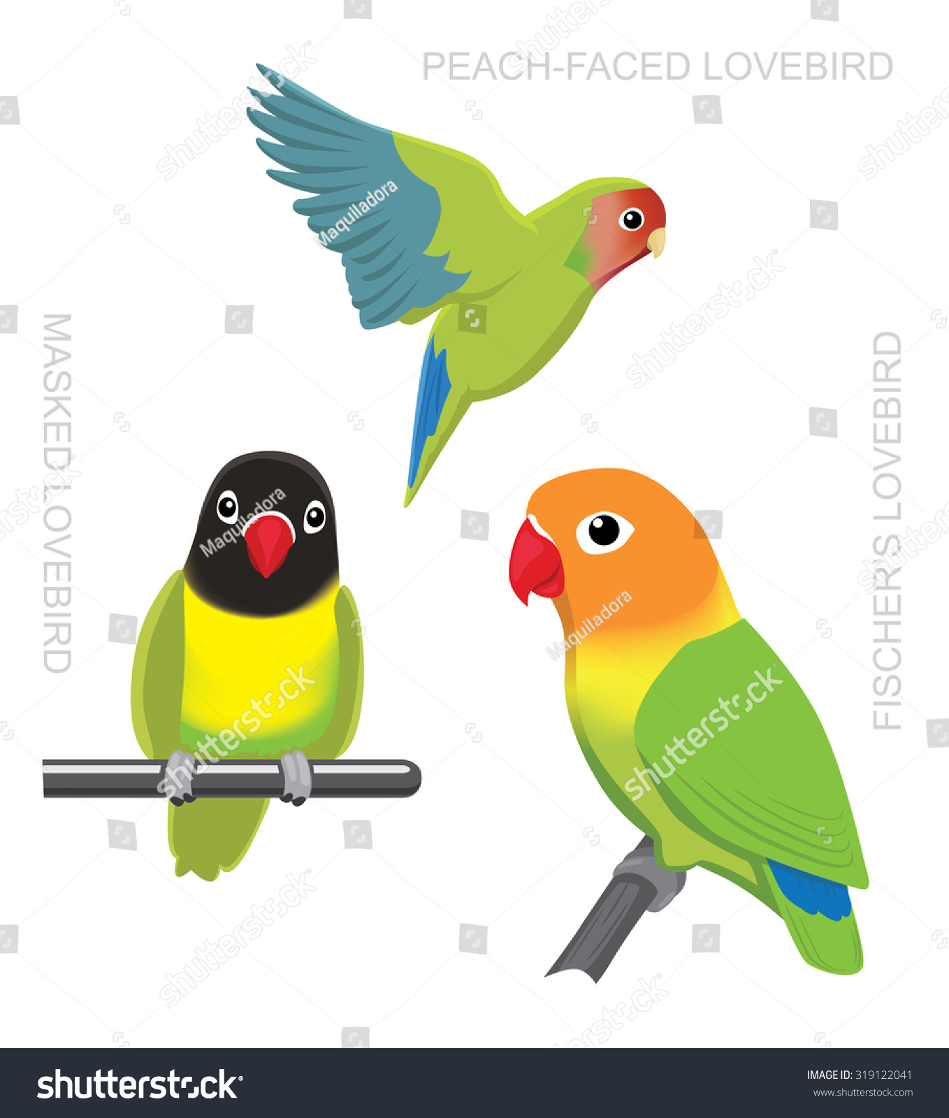 burung lovebird vector burung labet