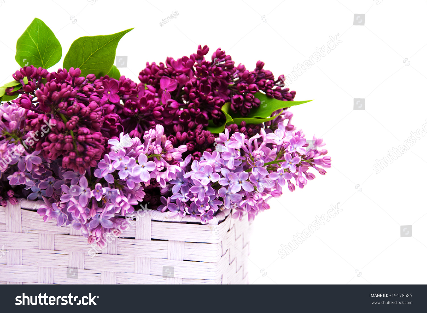 Basket With Lilac Flowers On A White Background Ez Canvas