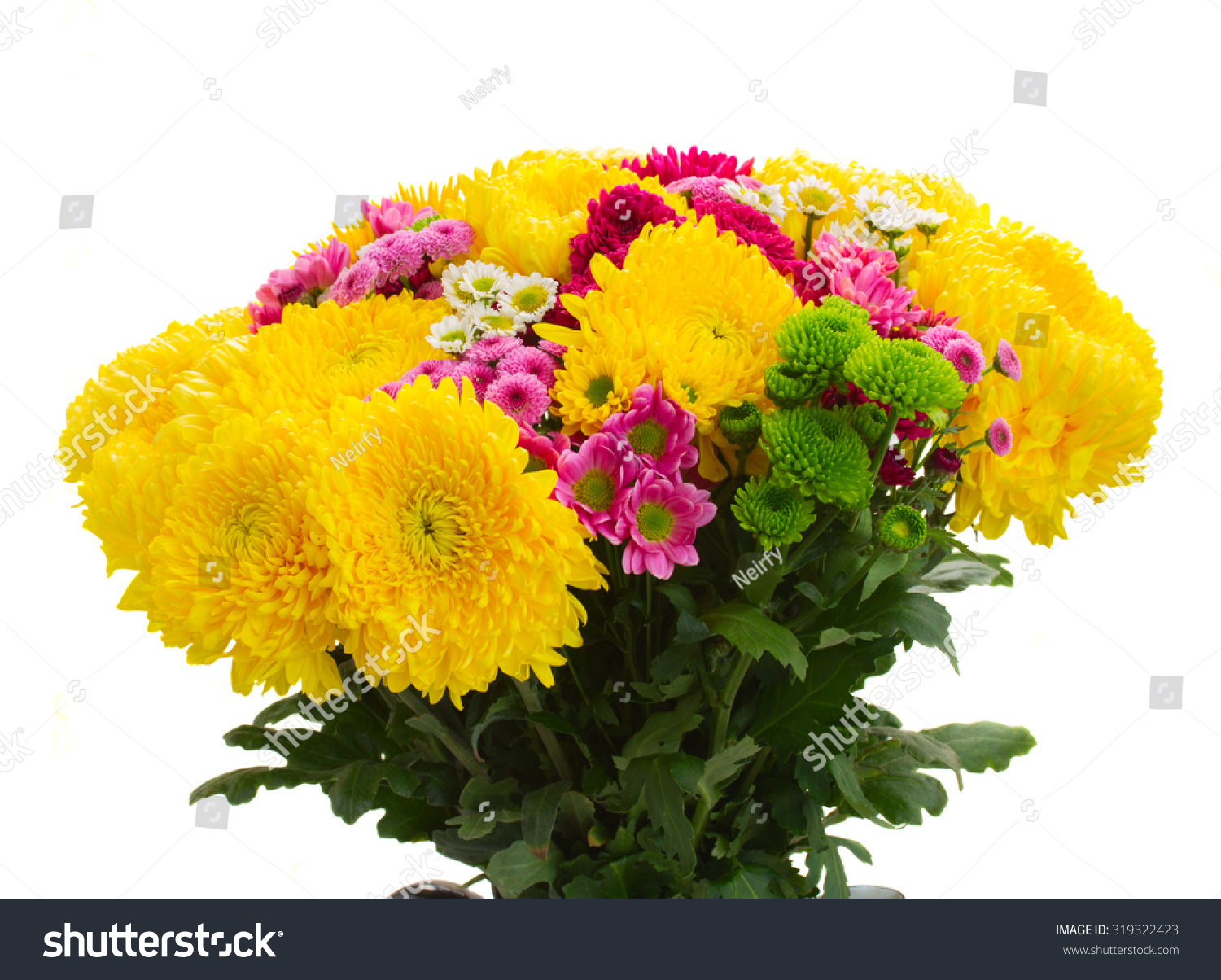 Bunch Yellow Red Pink Mum Flowers Stock Photo Edit Now 319322423