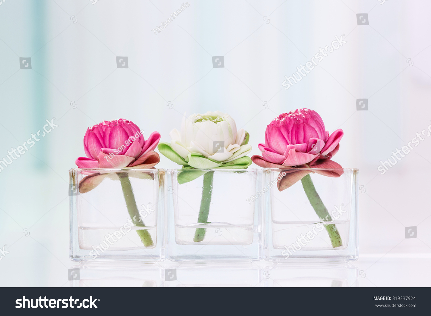 Lotus Flower Water Lily Decoration Glass Stock Photo Edit Now