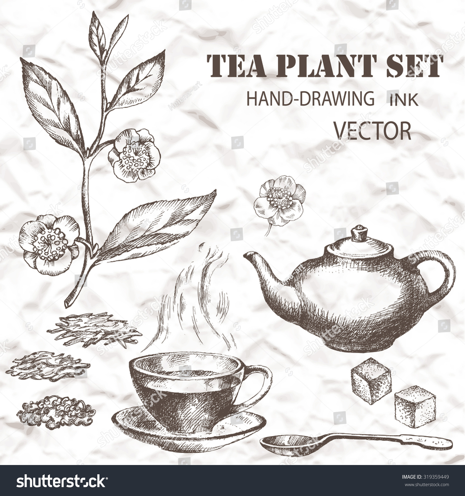 Tea Plant Set Hand Drawn Vintage Background