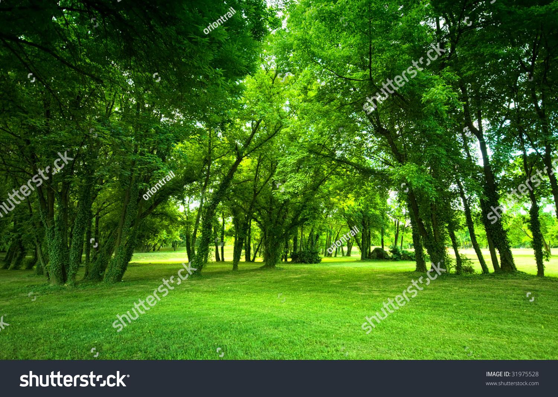 Green Grass Trees Park Stock Photo 31975528 Shutterstock