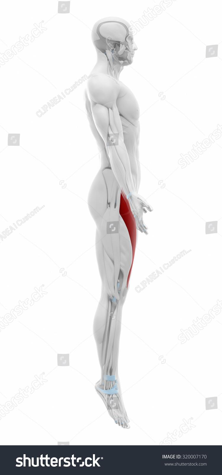 Atractivo Anatomie De Abusos Philip Stubbes Bosquejo - Anatomía de ...