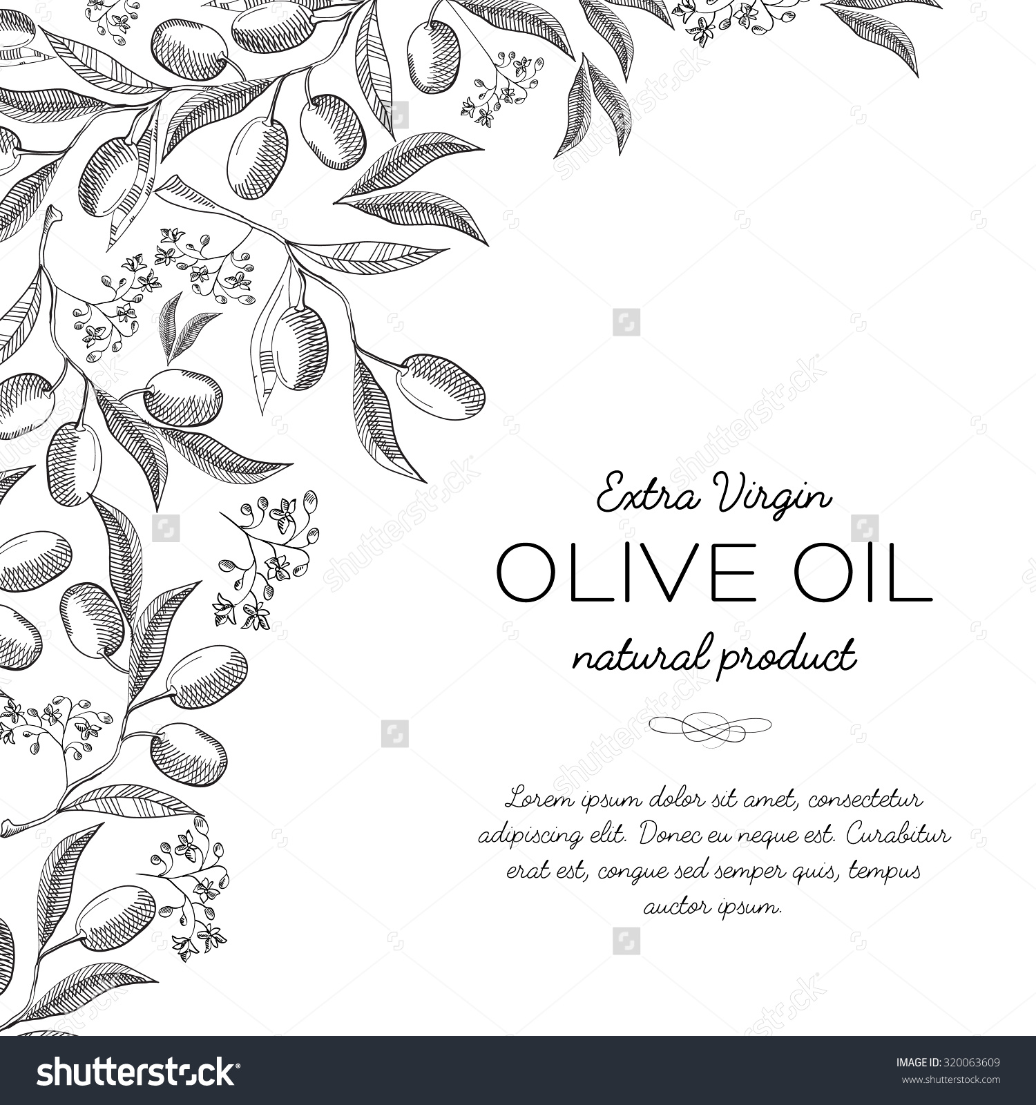 Twigs olive background Sketch Hand drawing Design concept Vector Illustration eps10 contains transparencies