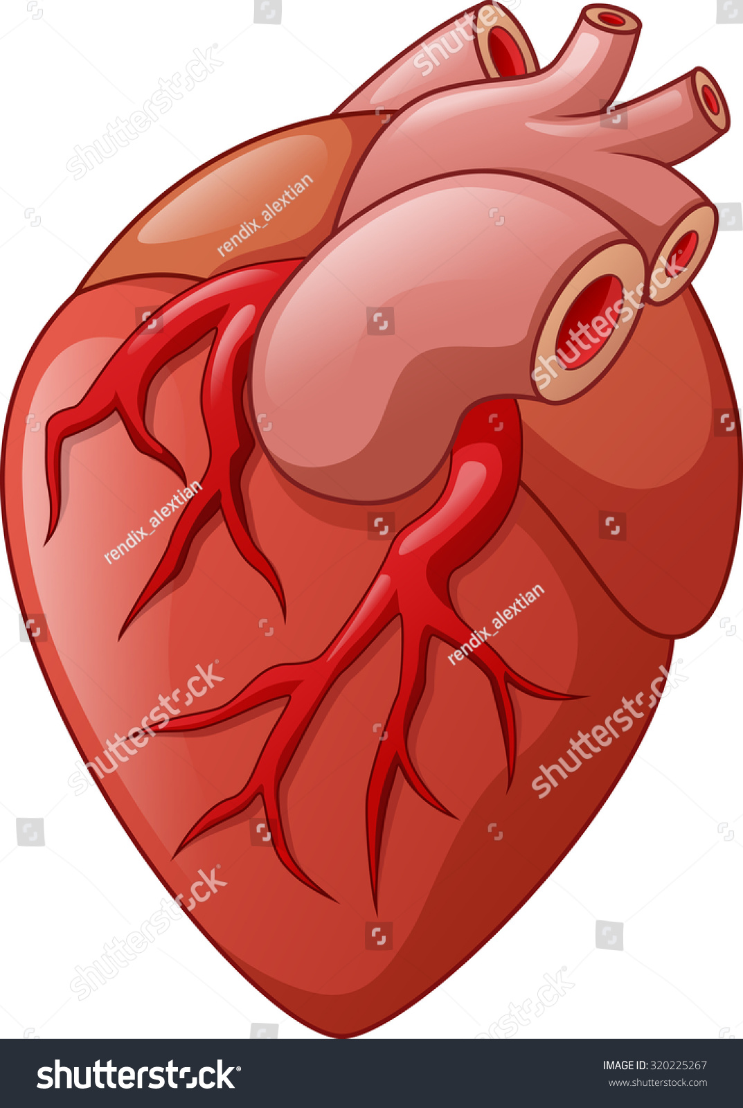 clipart of a human heart - photo #41