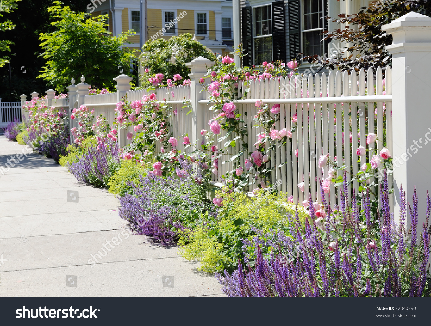 White fence flowers pink roses blue stock photo 32040790 for Blumenrabatte gestalten