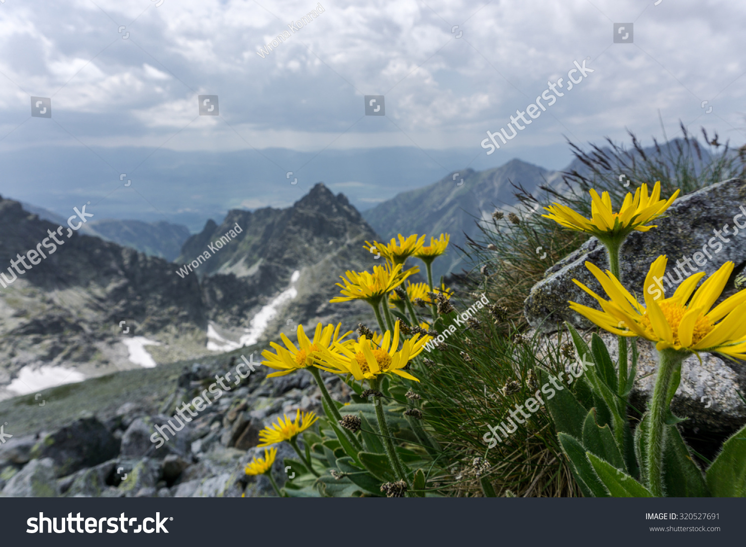 Yellow Mountain Flowers Stock Photo Edit Now 320527691 Shutterstock