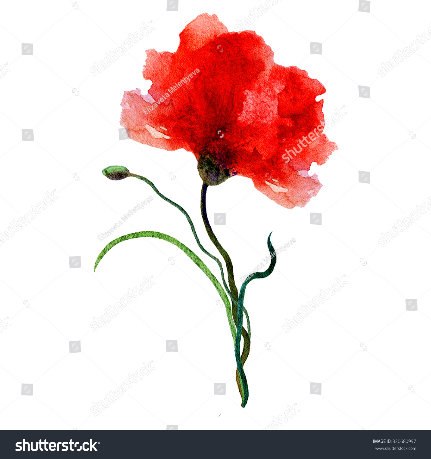 Watercolor poppy on a white background. Can be used for banner ...