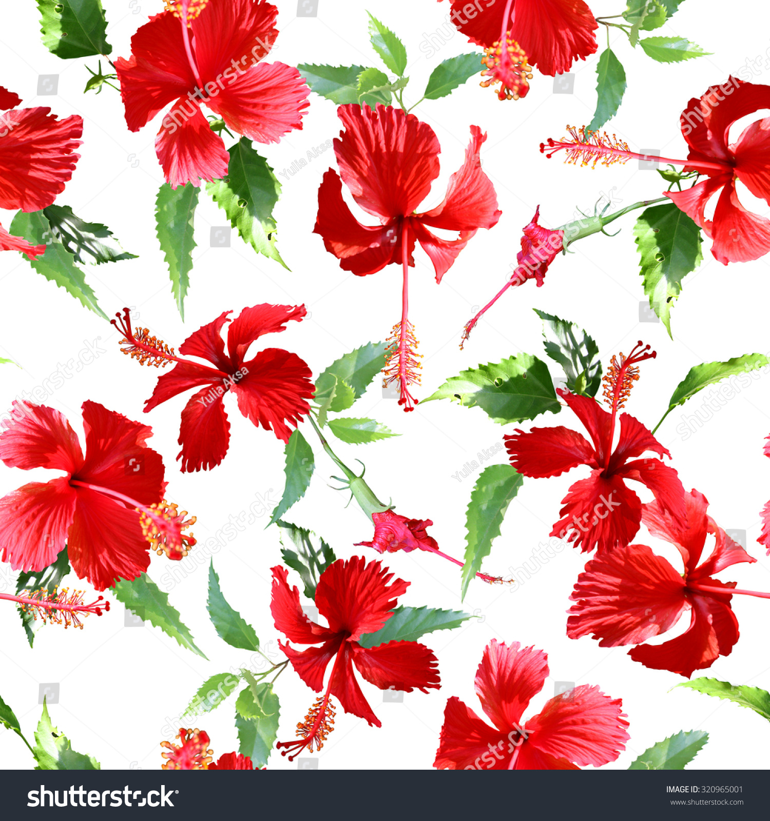 Tropical Flowers Pattern On White Background Stock Illustration