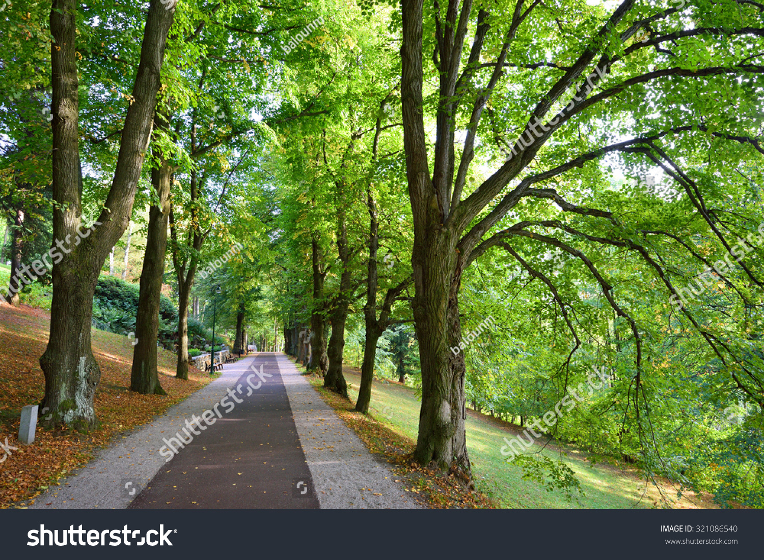 Long Alley Green Trees Straight Road Stock Photo 321086540 ... for Straight Road With Trees  568zmd