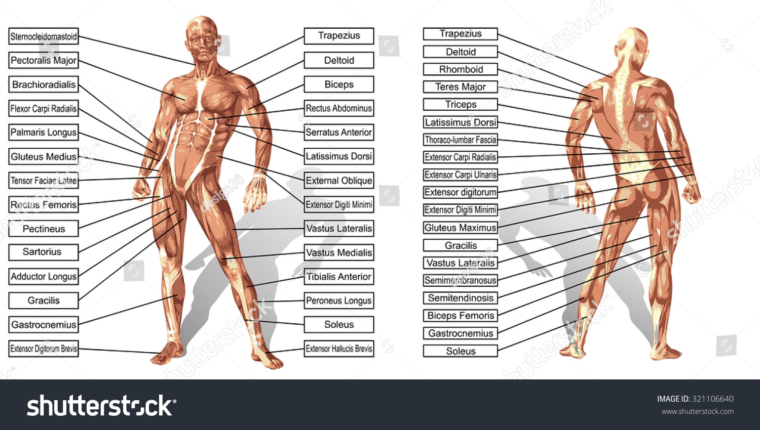 Concept Conceptual 3 D Human Man Anatomy Stock Illustration ...