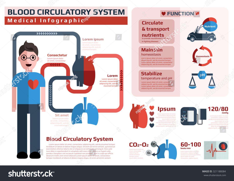 Blood Circulatory System Cardiovascular System Medical Stock Vector ...