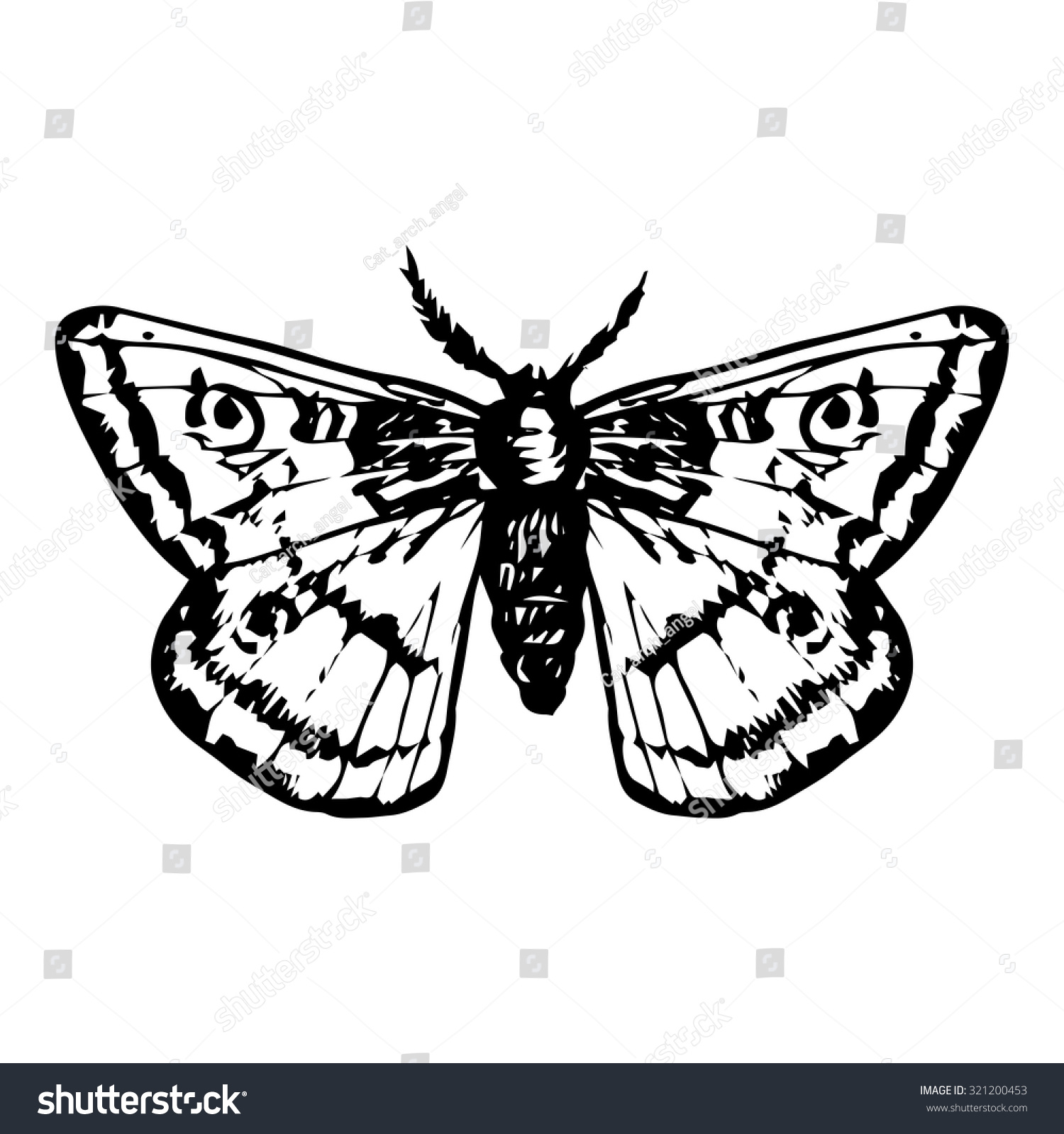 Hand drawn peacock butterfly night moth line drawing vector element