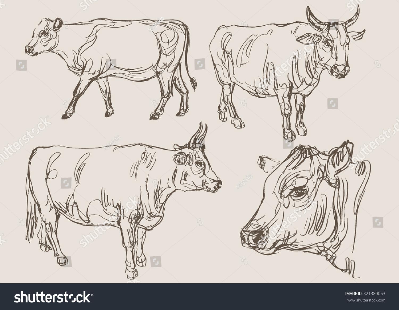 Bulls Vector Hand Draw Sketch Ez Canvas