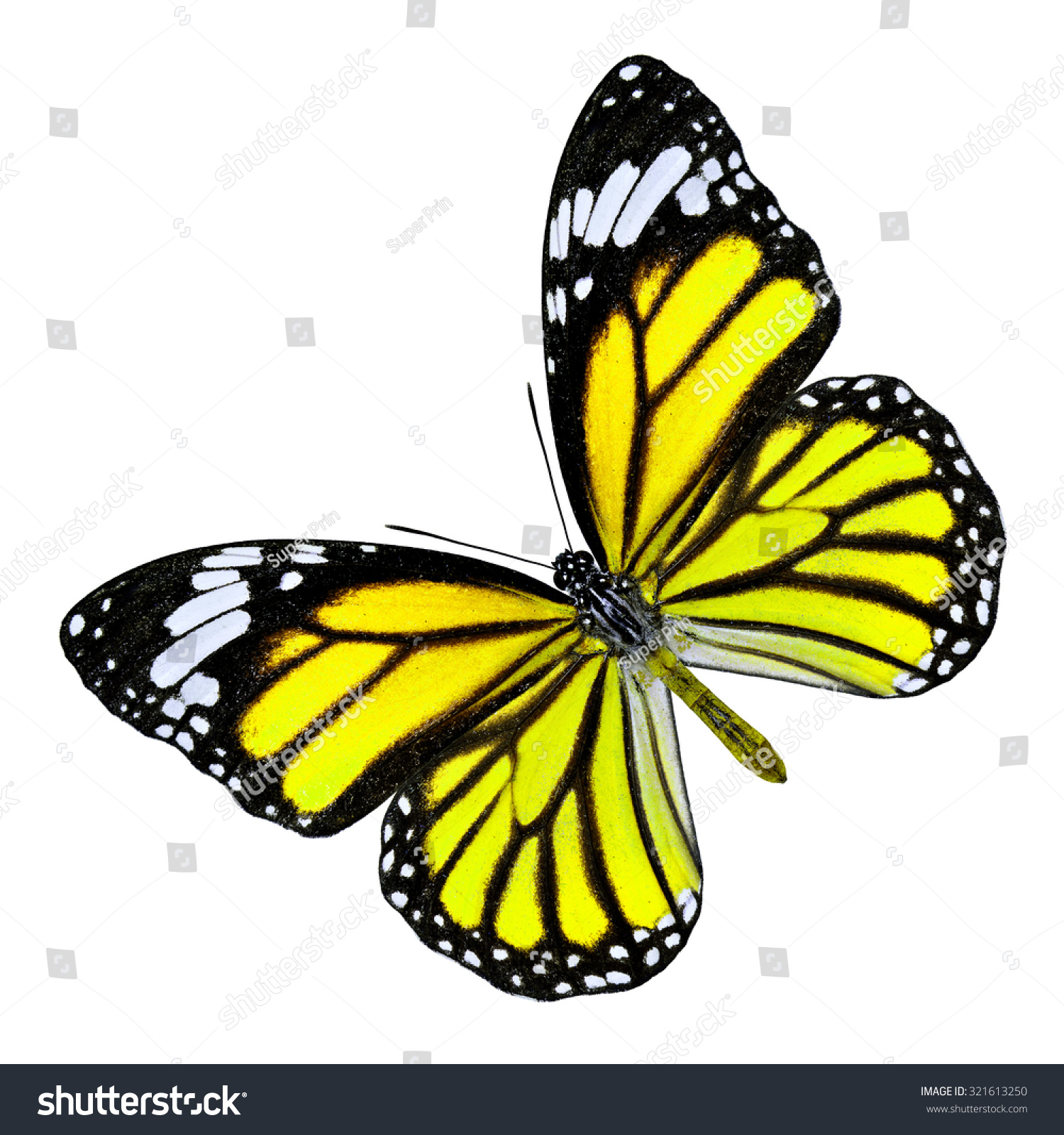 butterfly on yellow color - photo #4