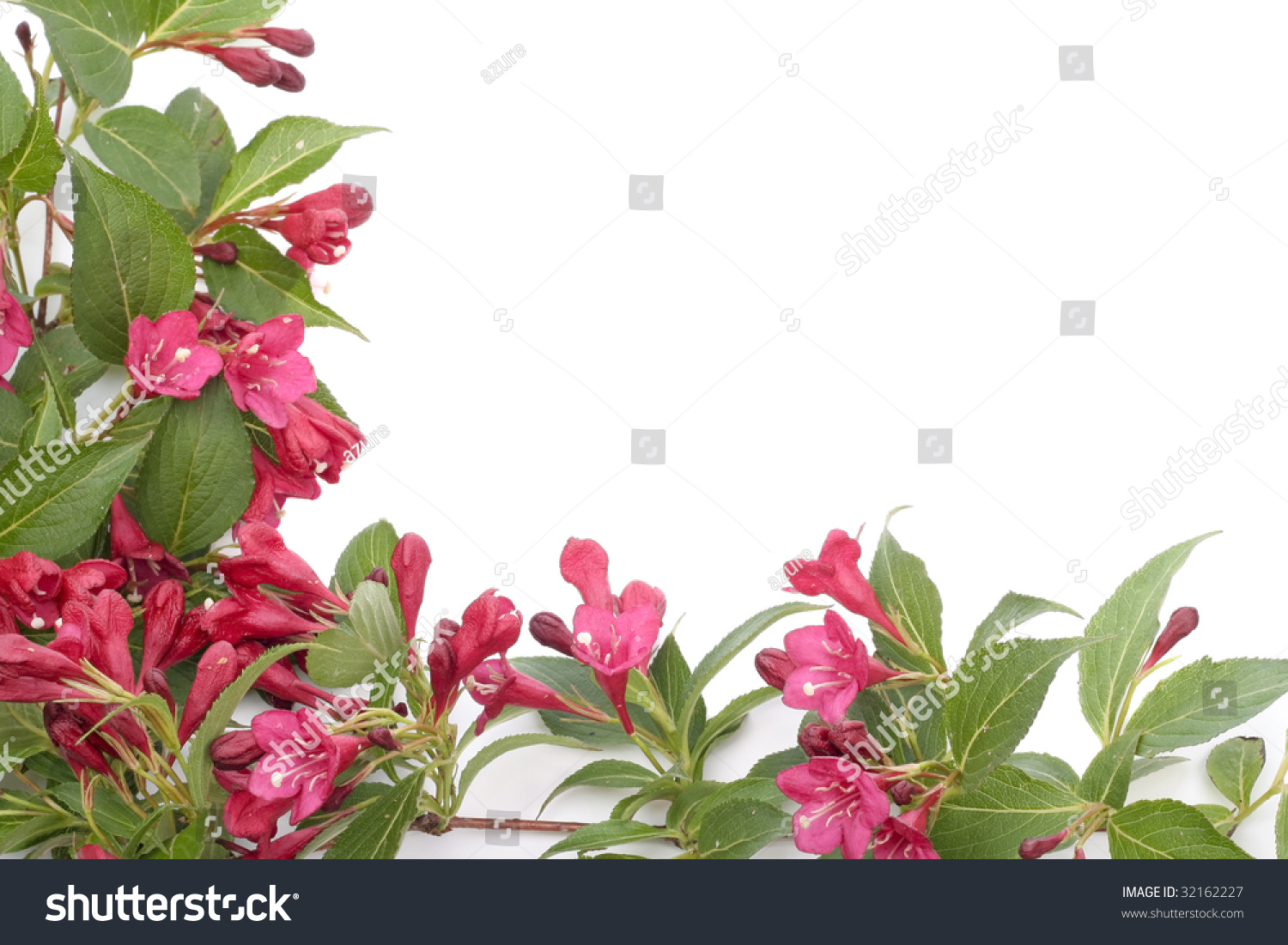 Red Bell Shaped Flowers Over White Background Ez Canvas