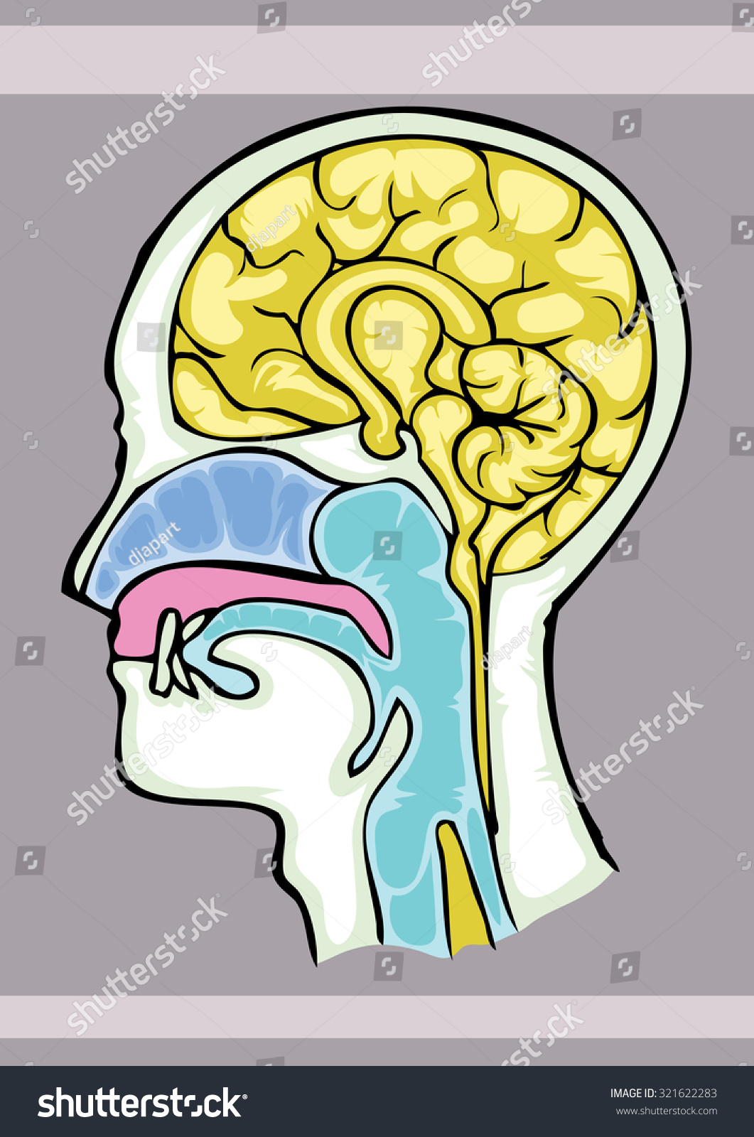 Human Brain Structure Cartoon Hand Draw Stock Vector Royalty Free