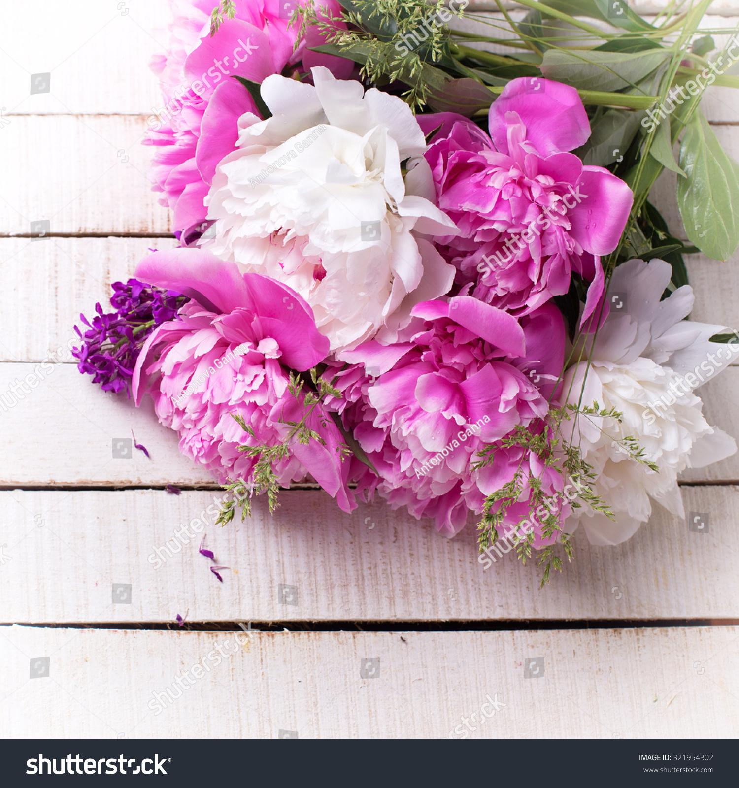 Pink White Peonies Flowers On White Stock Photo 321954302 Shutterstock