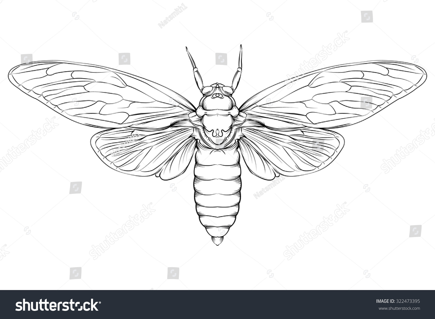 Line Drawing Editor : Vector drawing large moth line stock