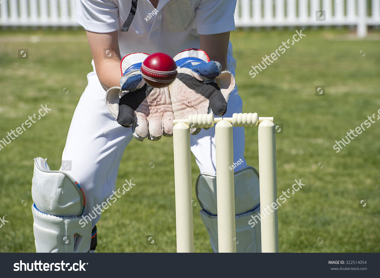 Wicket Keeper Catches Cricket Ball Foto de stock (libre de regalías ...