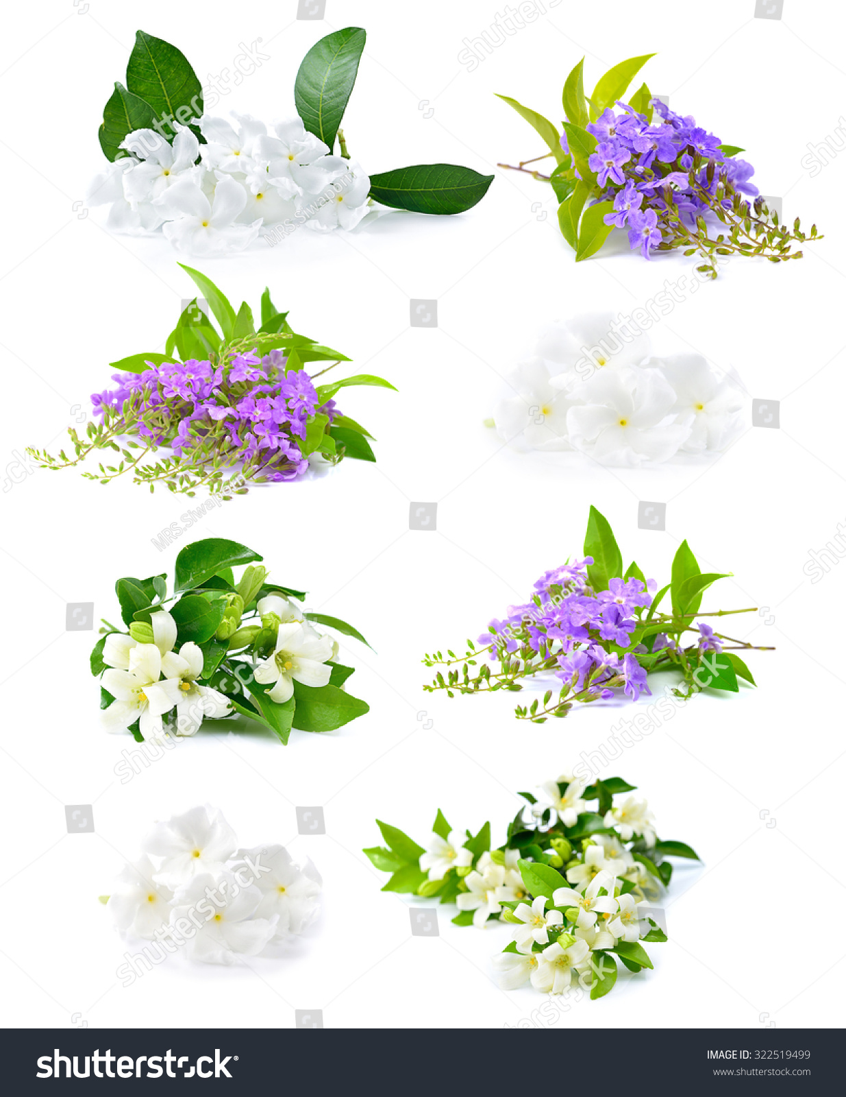 Fresh White Flowers Purple Flowers Isolated Stock Photo Edit Now
