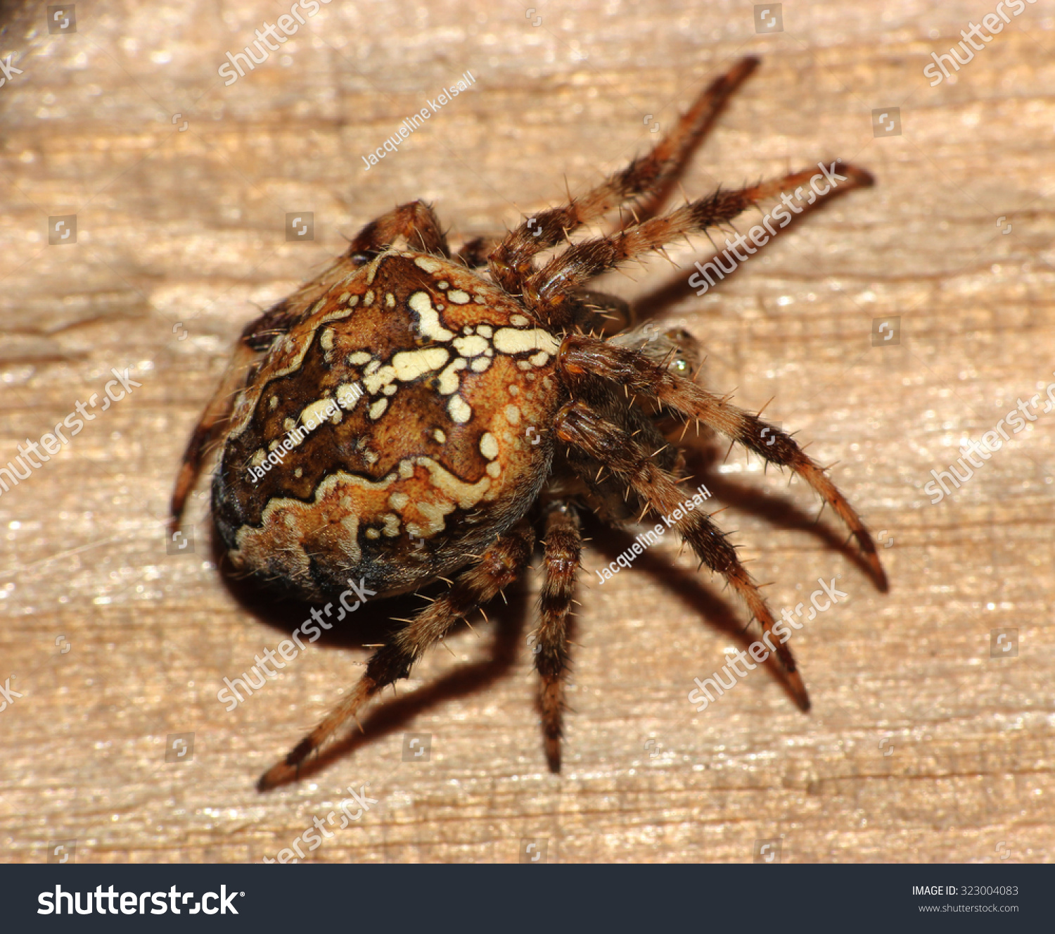 Common Garden Spider On Wooden Background Stock Photo (Royalty Free ...