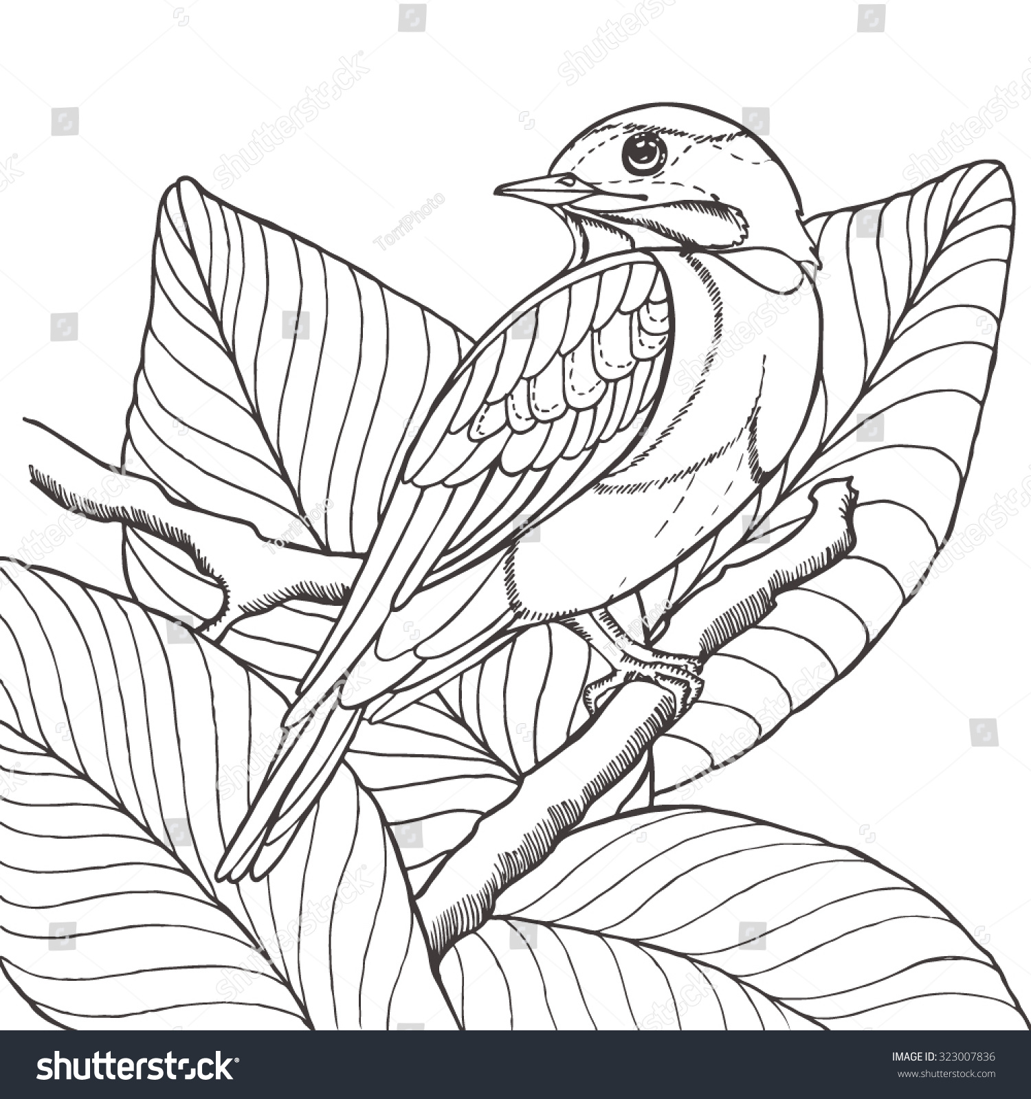 Sketch Tropical Bird Sitting On Branch Stock Vector ...