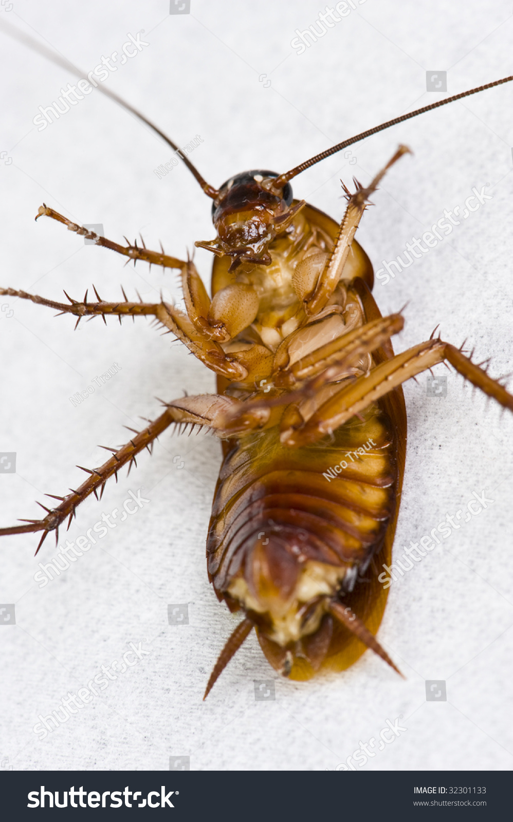 cockroach cockroach on its back