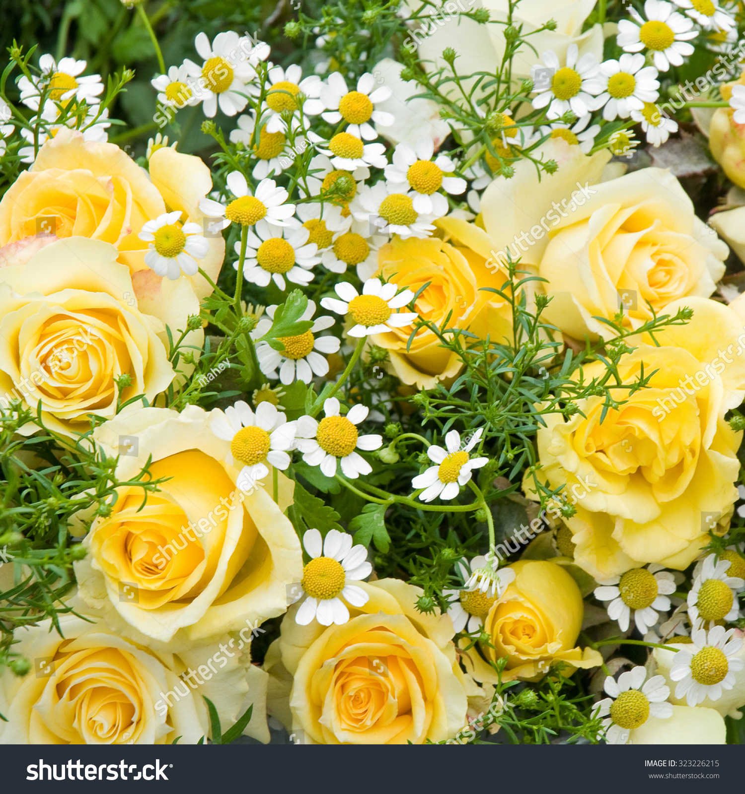 Beautiful Flower Bouquet Yellow Roses Small Stock Photo Royalty