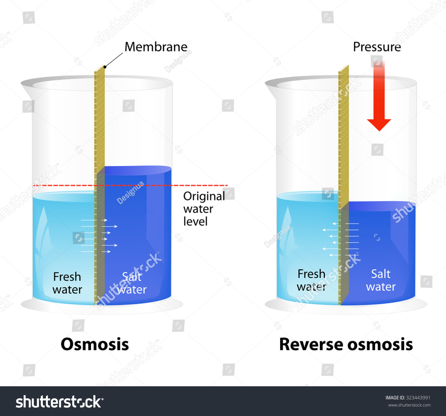 Difference Between Osmosis Reverse Osmosis Water Stock Vector