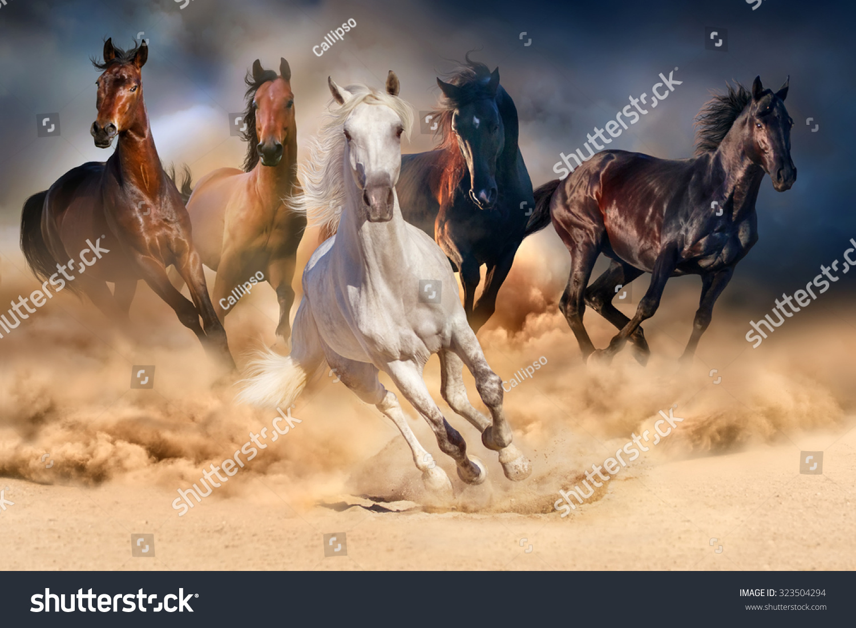 Wild Horse Running Fast Horse Herd Run Desert ...