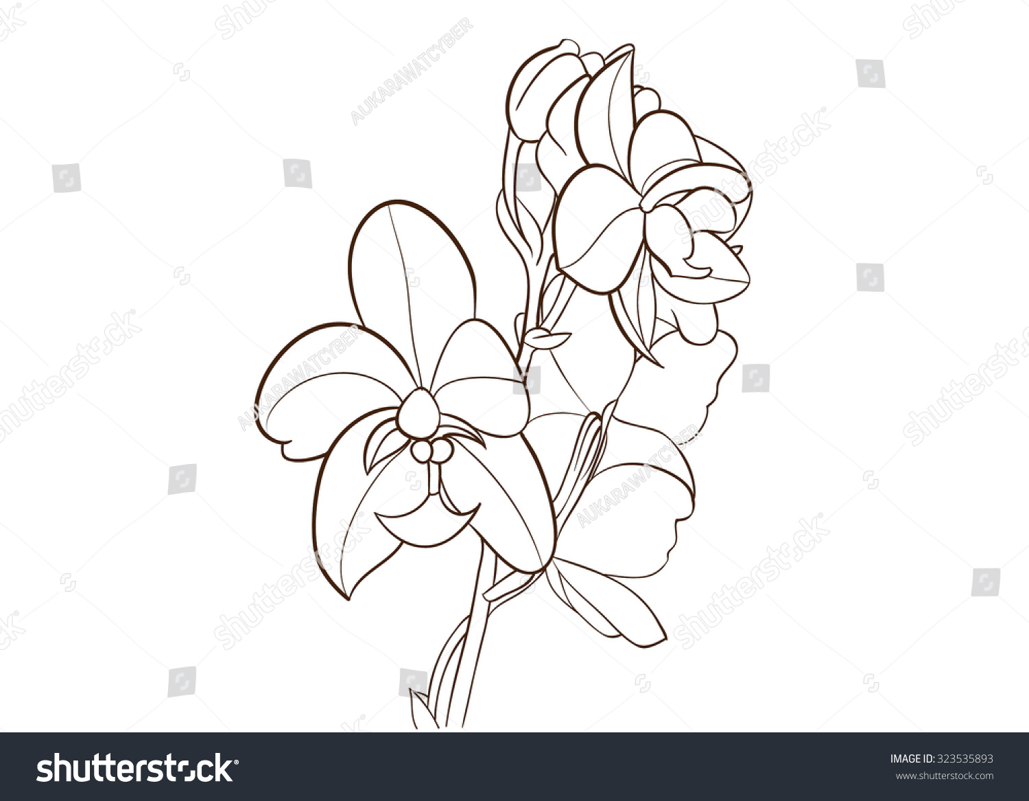 Orchid Flower Line Drawing : Ground orchid flower drawing vector stock