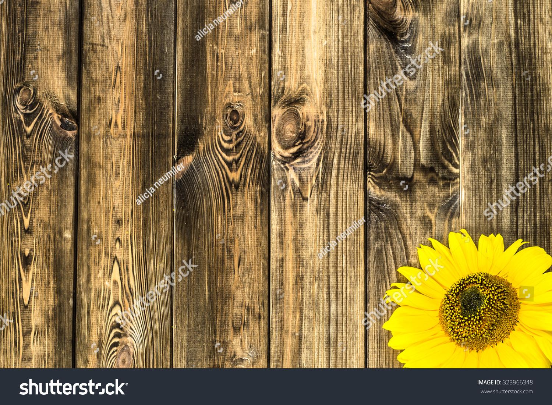 Beautiful sunflower on rustic wood background stock photo