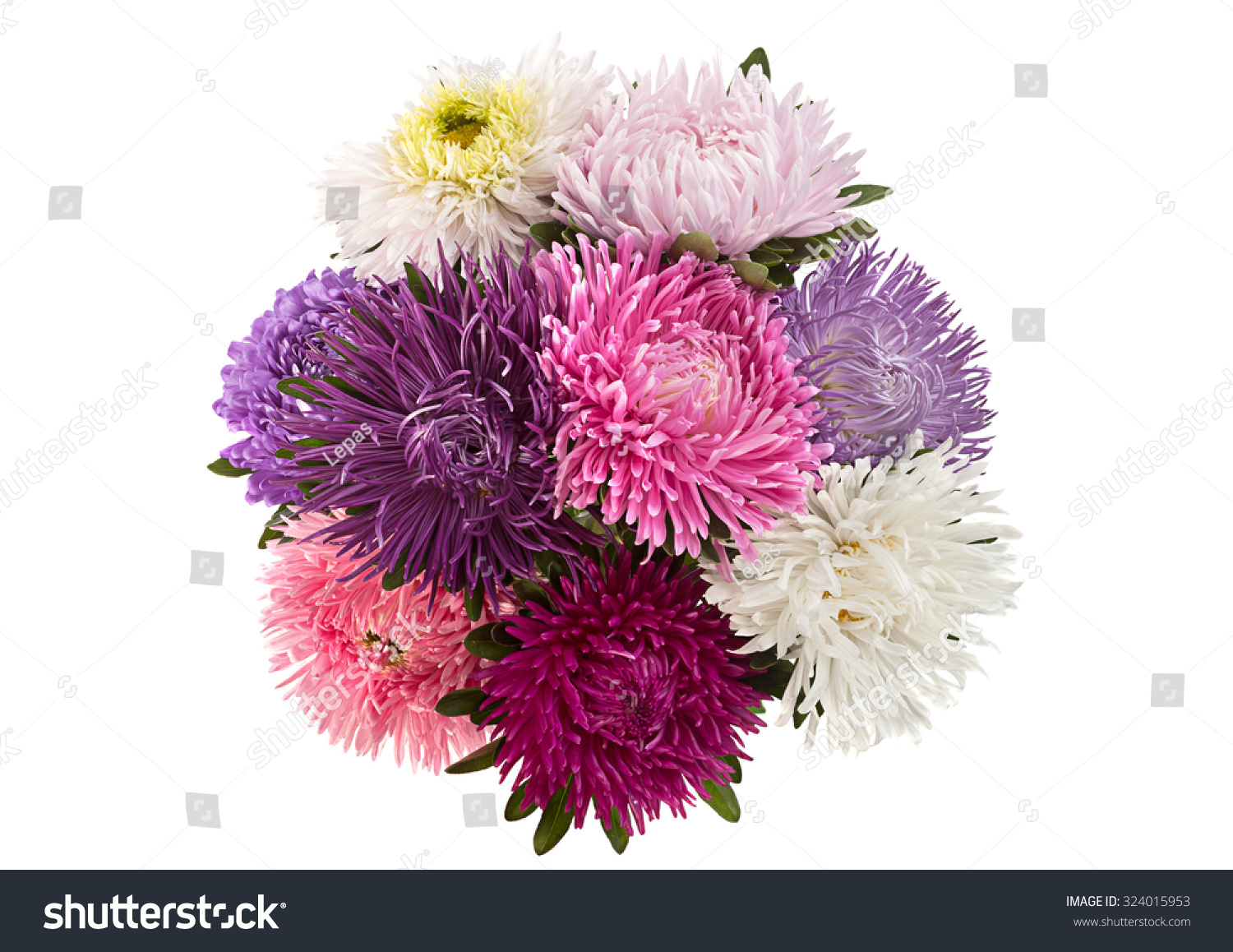 Aster Flower Bouquet Closeup Isolated On Stock Photo Edit Now