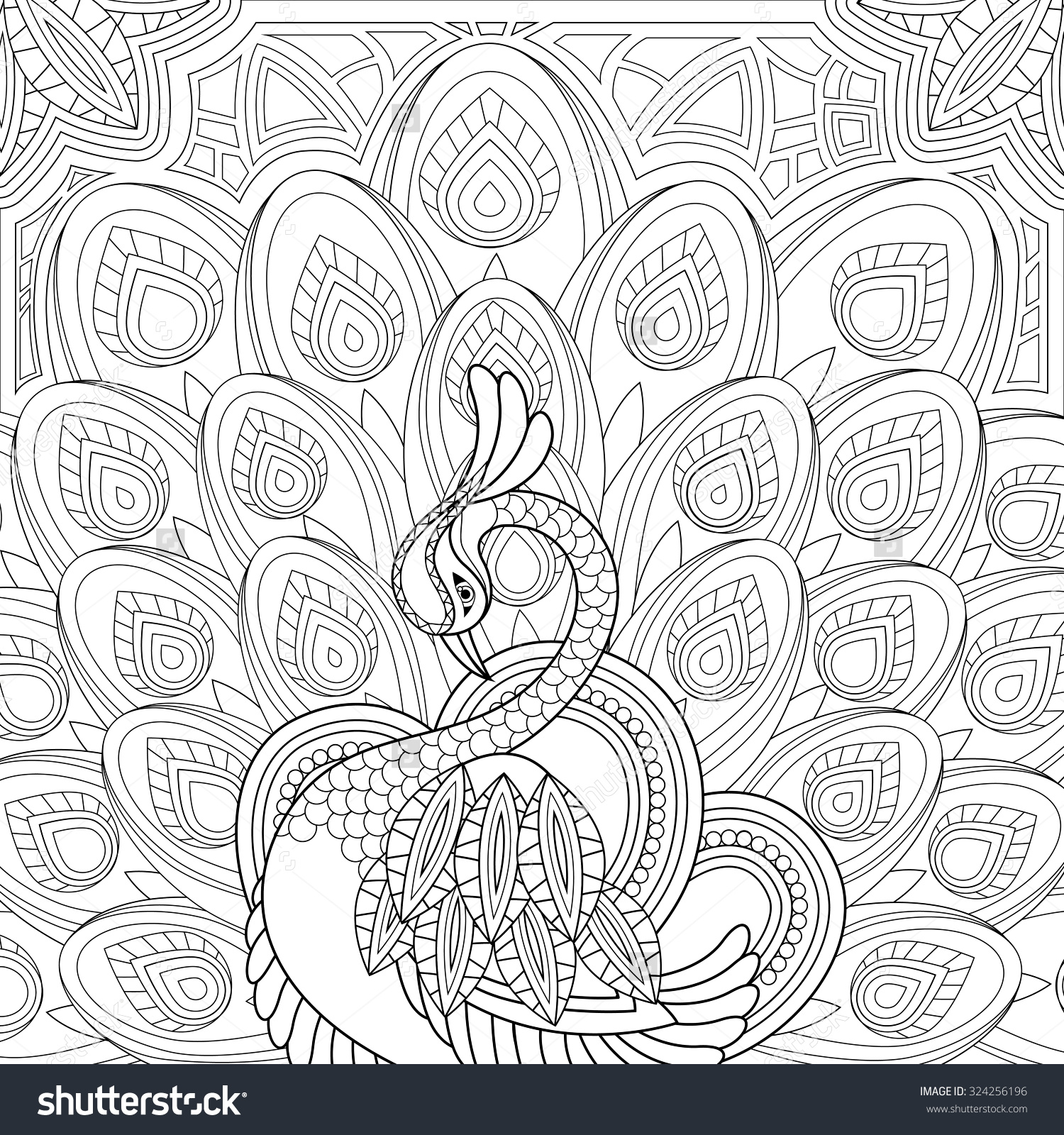Peacock Coloring Page – Craftbnb