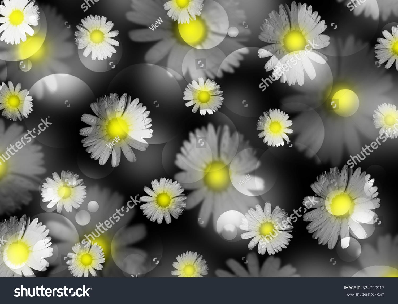 Beautiful Daisies Yellow Center Black White Stock Illustration
