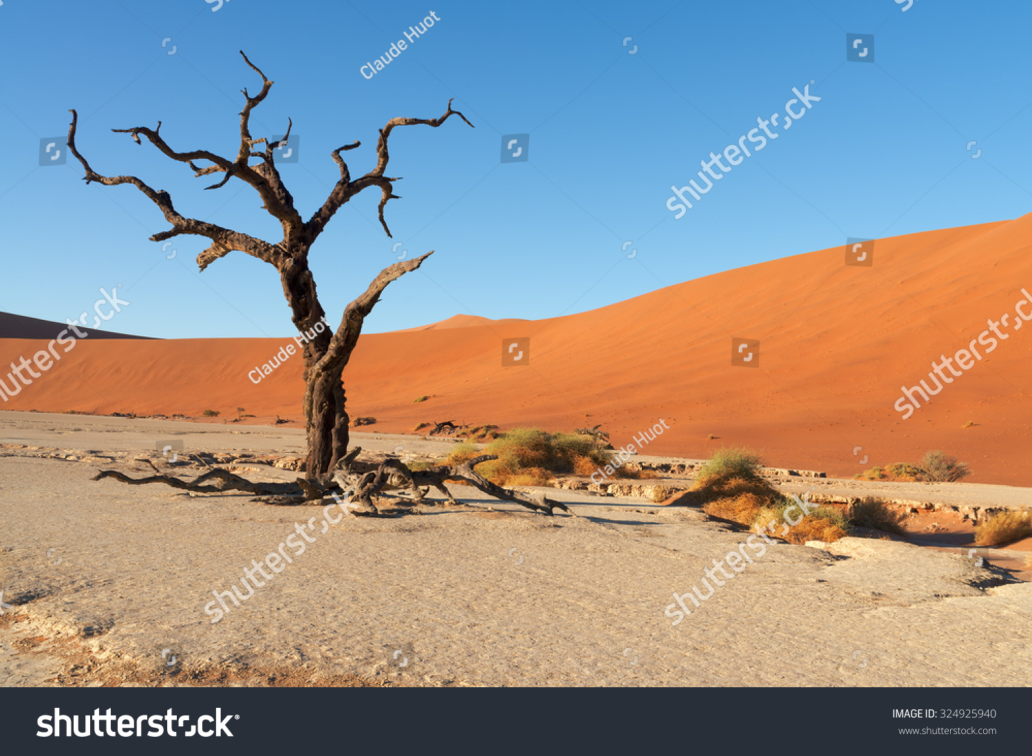 Red sand dunes and scorched dead trees shortly after sunrise in Deadvlei, Sossusvlei, Namibia