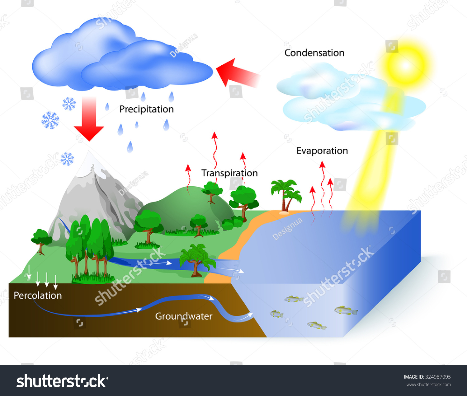 water cycle diagram  the sun  which drives the water cycle  heats    save to a lightbox