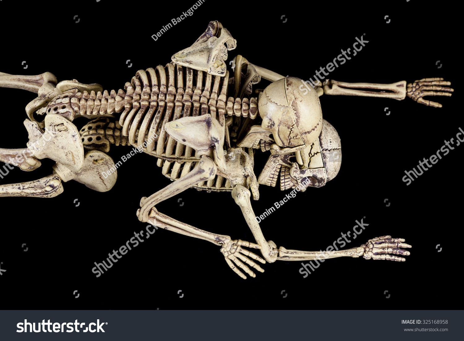 halloween sexskeletons having on black stock photo 325168958
