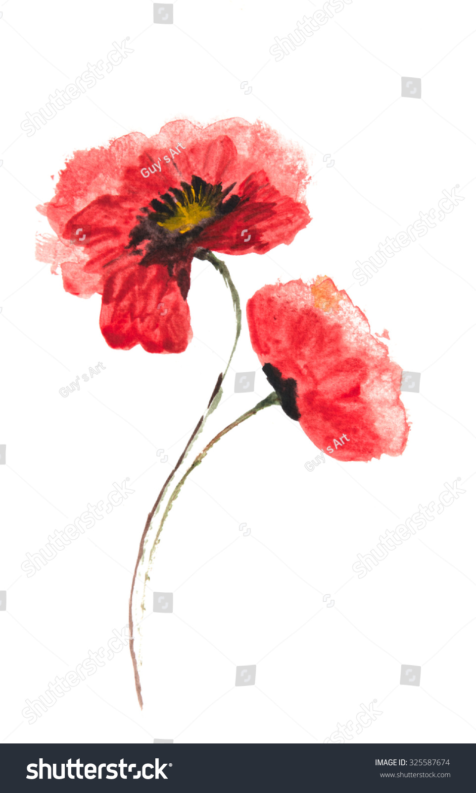 Red Poppy Flowers Acrylic Color Illustrator Stock Illustration