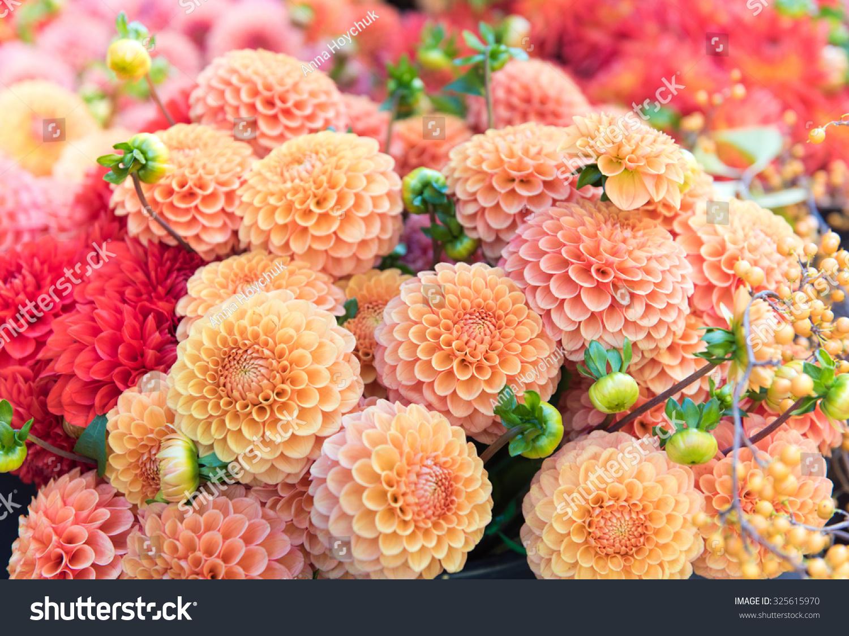 Beautiful Dahlia Flowers Sale Local Market Stock Photo Edit Now