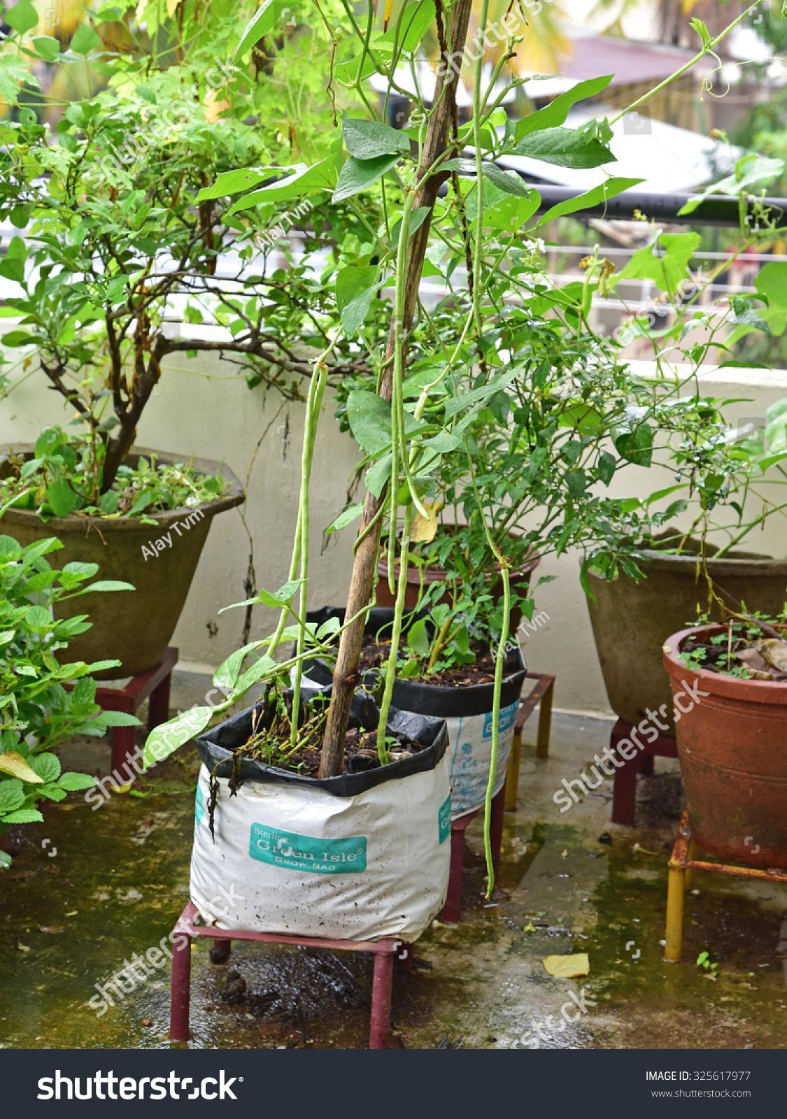 Trivandrum kerala india october 04 2015 stock photo for Terrace vegetable garden kerala