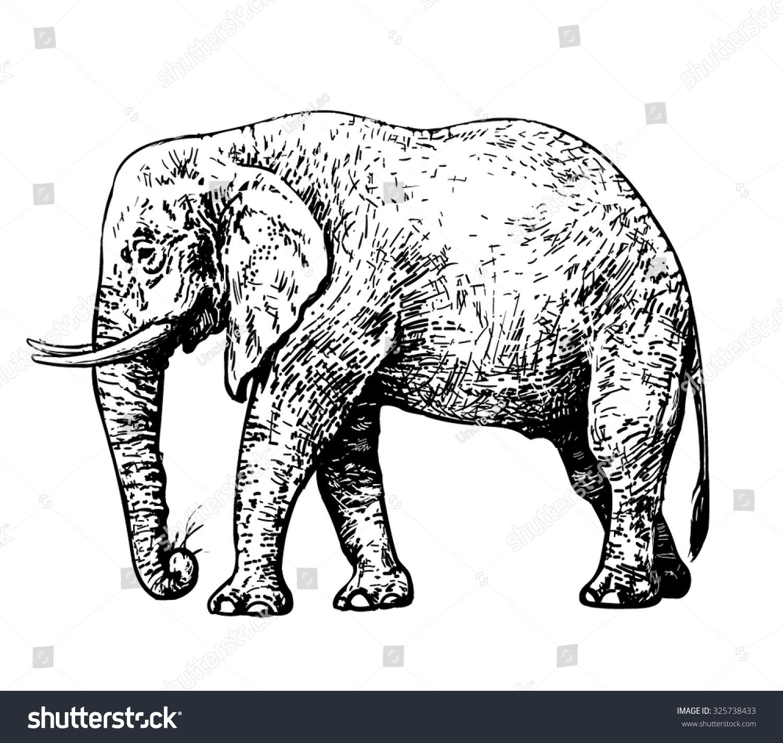 African Elephant Hand Drawn Vector Stock Vector (2018) 325738433 ...