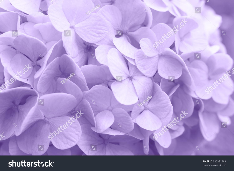 beautiful floral background purple pastel colors stock photo