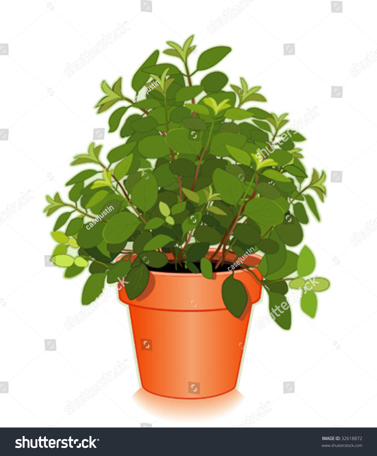 Vector fresh italian oregano in flowerpot aromatic perennial herb pungent leaves to flavor - Aromatic herbs pots multiple benefits ...